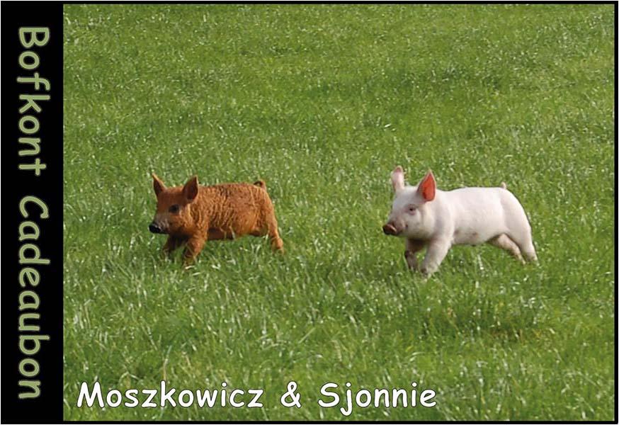 Moszkowicz & Sjonnie